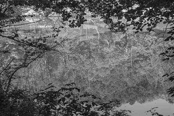 b/w photo of pond surface with trees